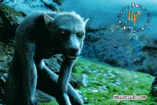 Remus Lupin Werewolf