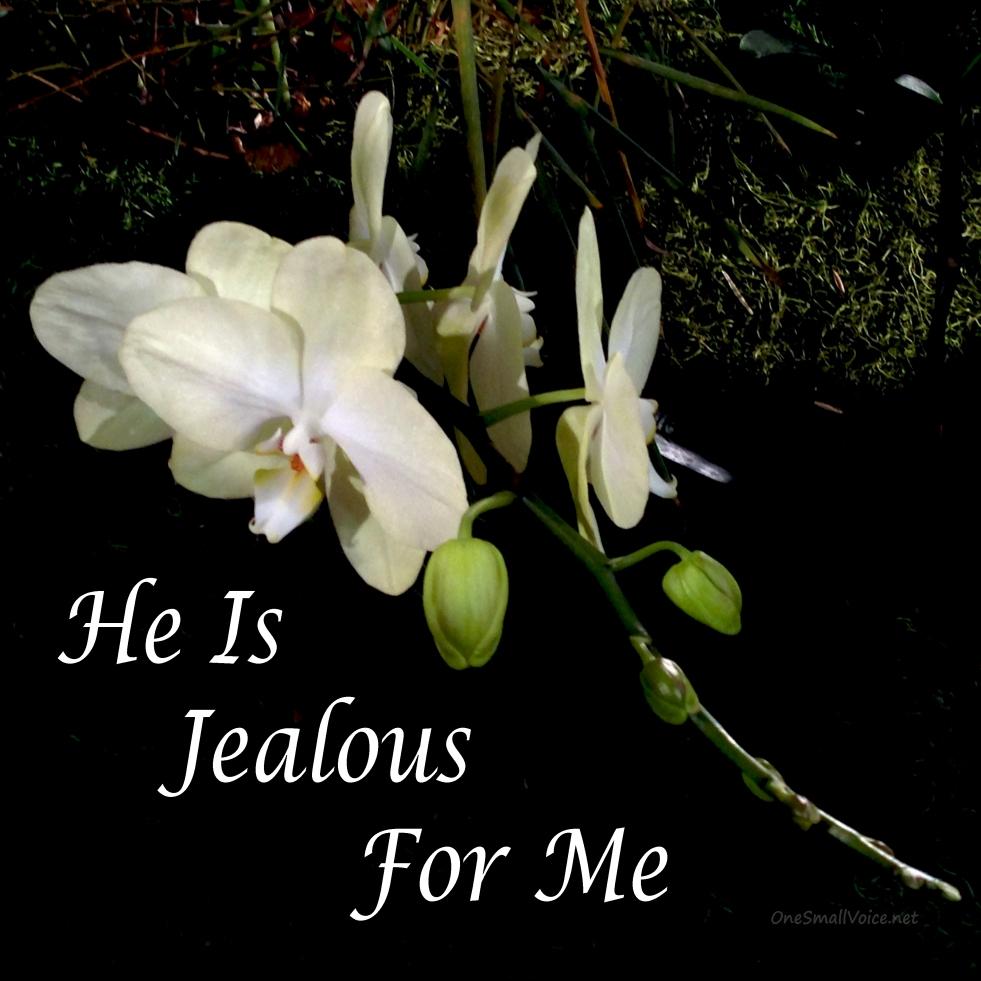 Jealous_Orchid_3207