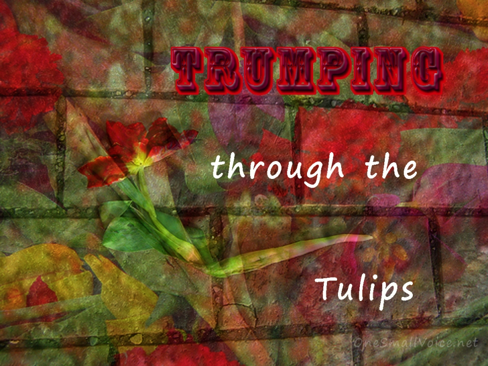 Trumping Through the Tulips copy