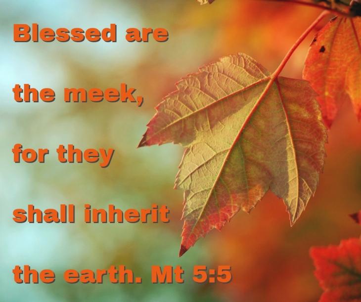 blessed-meek