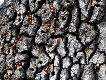 acorns-close-p1040184