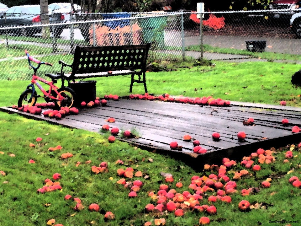 apples-wet-day_6510-osv
